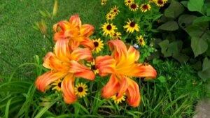 Простой ландшафтный дизайн, цветники у моего дома, лилейники - цветы для лентяев