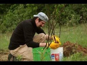 Идеи для сада - деревья летом!  Как сделать садовый участок красивый летом.