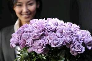 Голубые розы - Незабудки