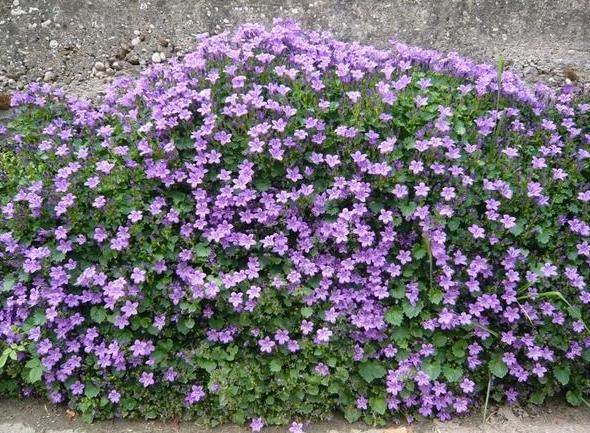 Растения цветущие все лето