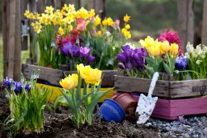 Пособие для дачника: многолетники цветущие все лето