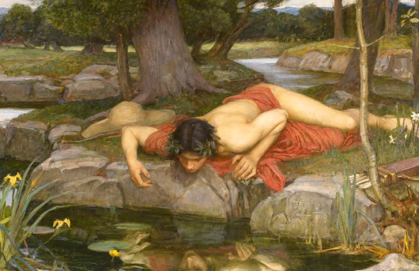 Нарциссы - как правильно организовать посадку и уход в открытом грунте