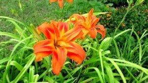 🍀🌻🌷 Простой ландшафтный дизайню Обрываем цветочки :)