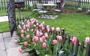 Все о тюльпанах для правильного выращивания растений